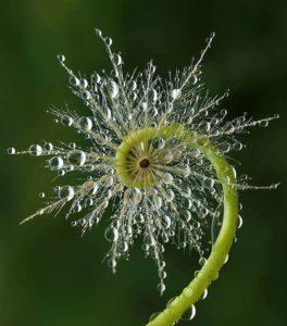 solstice-fern-copy